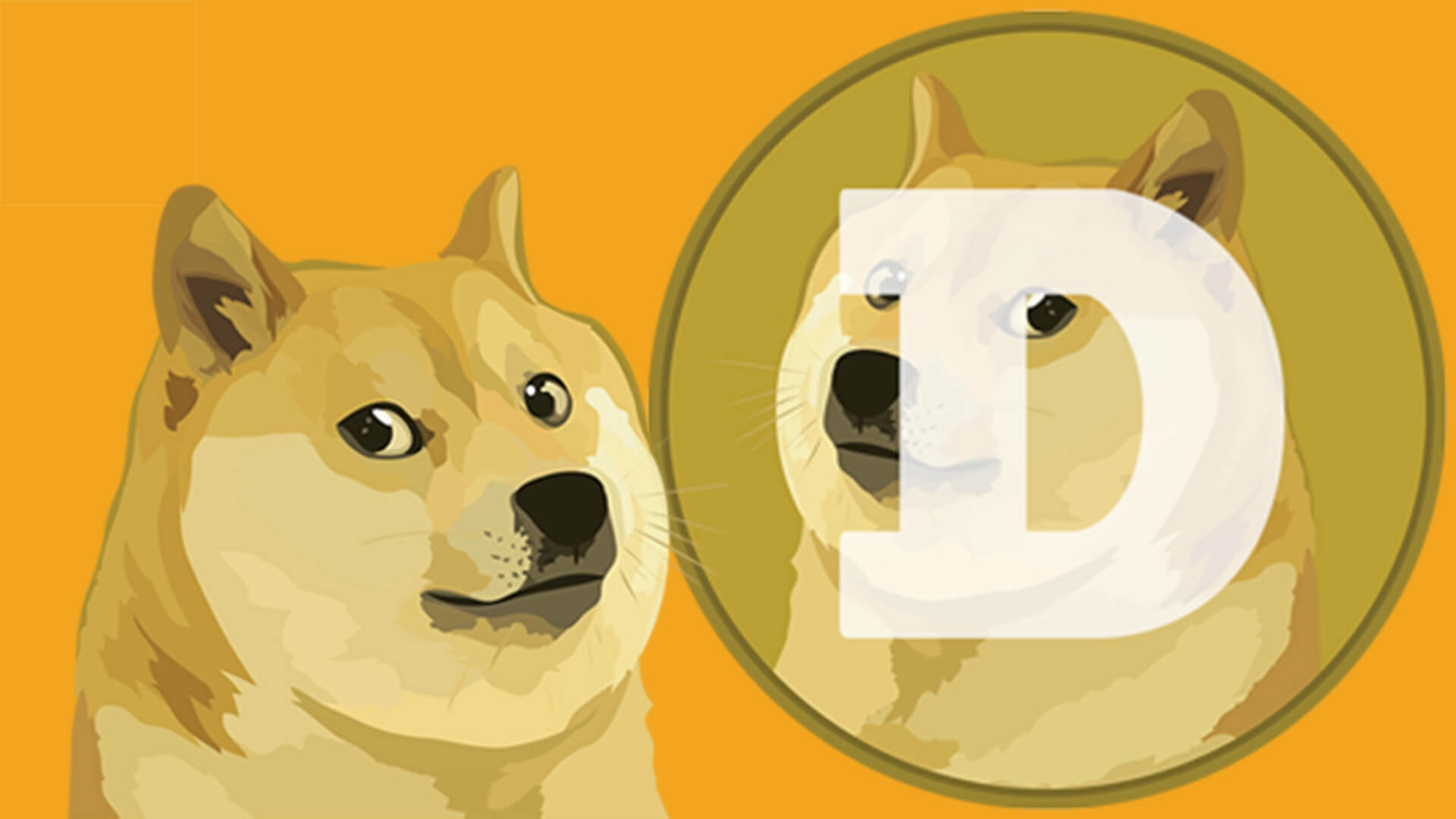 What is a Dogecoin Worth?